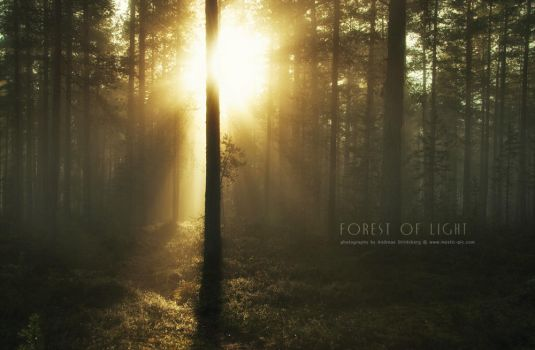 Forest of Light by Stridsberg