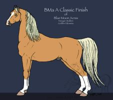 BMa A Classic Finish - Morgan by lantairvlea