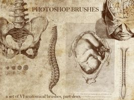 anatomical brushes, part deux by urbaniumz