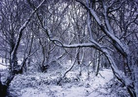 Nature - Winter by stocko