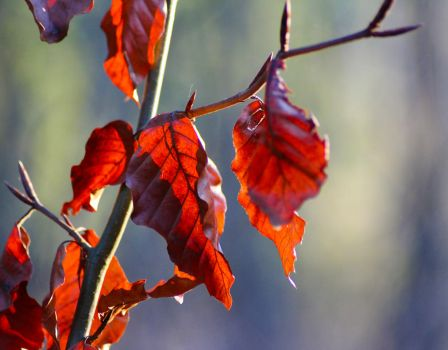 Nice colours of the leaves by chamathe