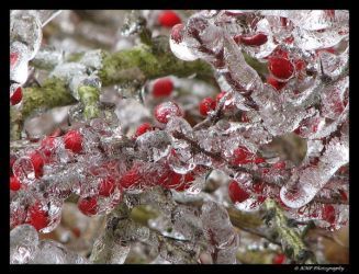 Iced by picworth1000wrds
