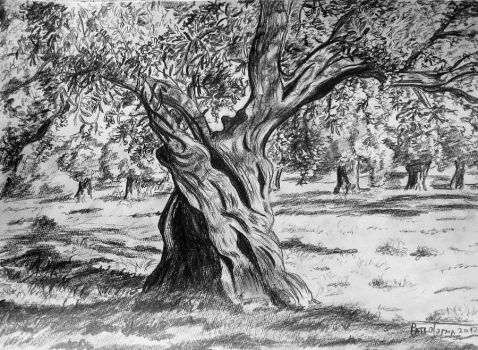 olive tree by 4ratko