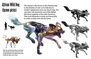 Painted Dog Sheet by Tikall
