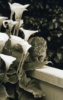 Cat and flowers by Stolvezen