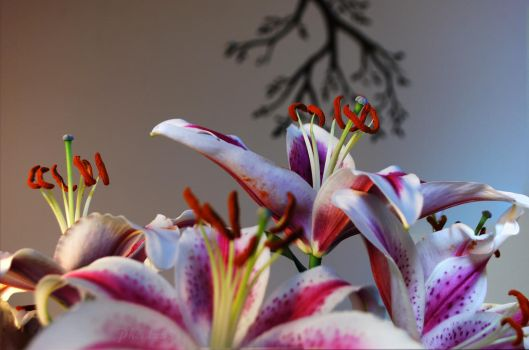 Lillies by Phenix59