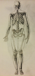 Skeleton Study #1 by Petuniabubbles