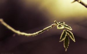 Twig wall 1280x800 by dexter13-sk
