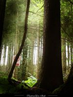 Forest 16 by AnitaJoy-Stock