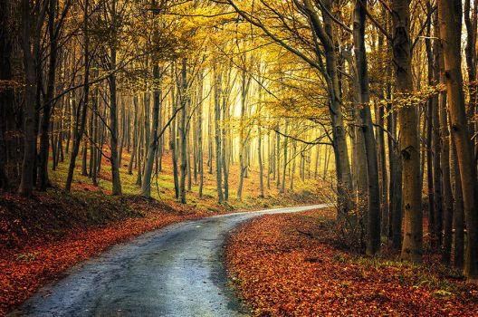 Autumn Journey pt.XIII. by realityDream