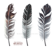 Feathers (STOCK) by Mr-Ripley