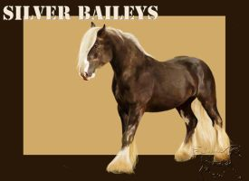 Silver Baileys by QueenOfGoldfishes