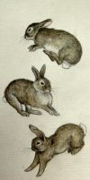 jumping rabbits by moussee