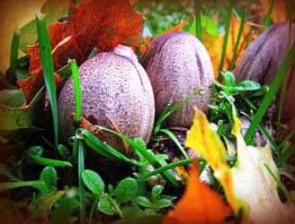 Fall Mushrooms in the Grass by surrealistic-gloom