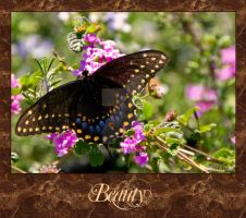 Butterfly Paradise by DleeKirby