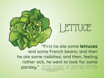 Lettuce by SheilaSunshine