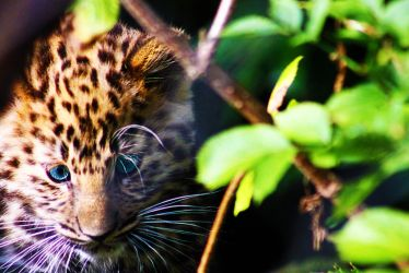 On the prowl by 53kshun8