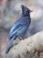 Steller's Jay by diana-0421