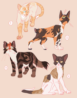 Warm Colored Cats - OTA [Closed] by dial1789