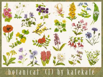 Flowers, Botanical - 1 by kafekafe