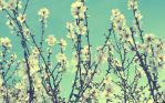 Spring. by HQheart