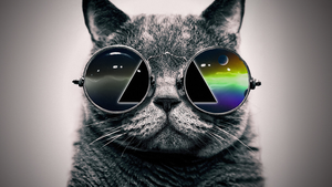 Sunglasses Cat by SoarDesigns