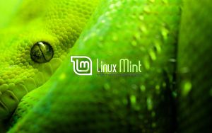 Wallpaper for Mint 52 by malvescardoso