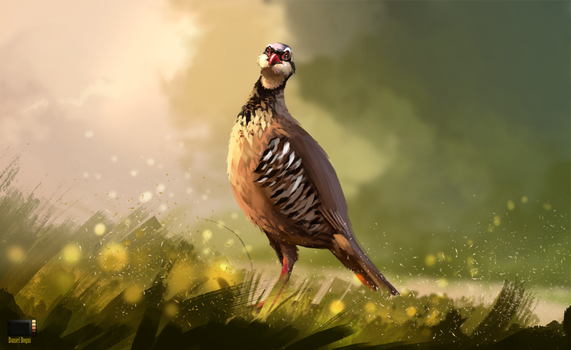 Video - Partridge by danielbogni