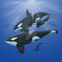 Orca Family Finished by loonerwolf