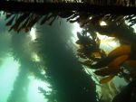 The Roof of the Kelp Forest by X5-442