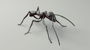 Bullet Ant (wip) by cvbtruong