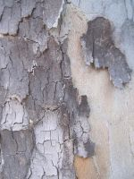 Tree Bark 2 by element321