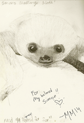 Baby Sloth for Simon by MidnightMusik14