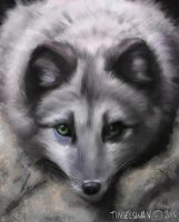 Arctic Fox by tinselswan