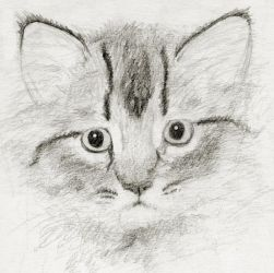 Little Kitty Sketch by asynjur