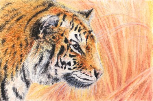 Tiger (watercolours) by Sillageuse