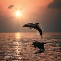 Dolphins by Vitaly-Sokol