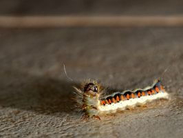 caterpillar by Schuemmel