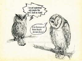 Why we love barn owls by Redilion