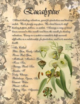 Book of Shadows: Herb Grimoire - Eucalyptus by CoNiGMa