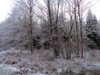 Snow at new place, trees 3 by GeneralDurandal