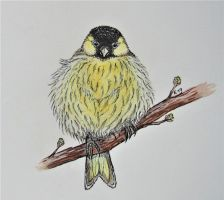Siskin by DevilishEvelyn
