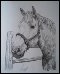 Leo Portrait by EquineArtist-Fanatic