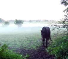 Horse in mist by Nivienne