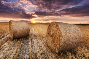 Path full of hay by Dybcio