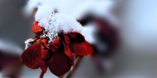 The Frozen Heart by AdonisWerther