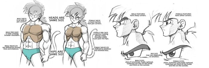 Dragonball Saiyan Anatomy Tutorial - Male/Female by Rider4Z