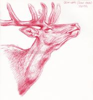 Red Deer head sketch by makangeni
