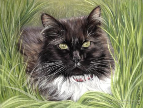 Black Cat in the Grass Pastel Portrait by LouiseMarieFineArt