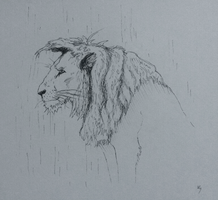 Lion In the Rain by shewolf444